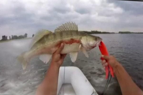 mơ thấy bắt cá