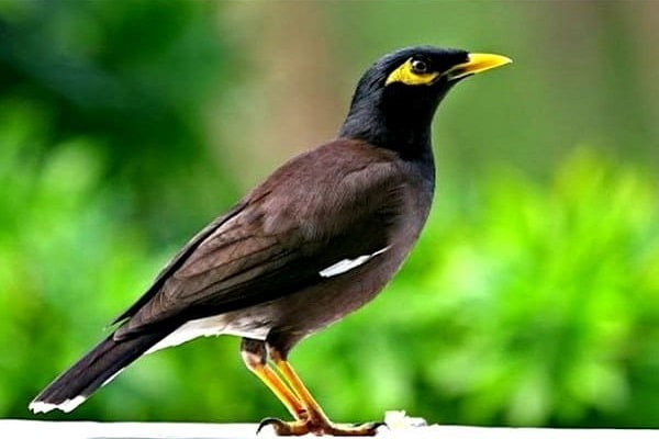 Điềm báo trong giấc mơ thấy chim