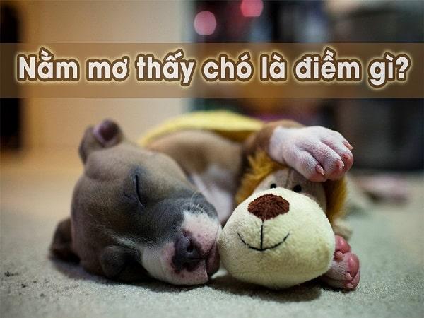 Nằm mơ thấy chó là điềm báo gì, đánh con số nào khi nằm mơ thấy chó?