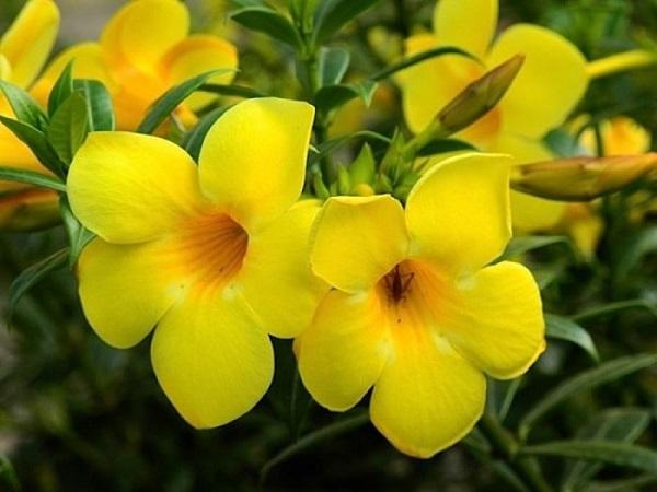 Mơ thấy hoa màu vàng đánh con gì