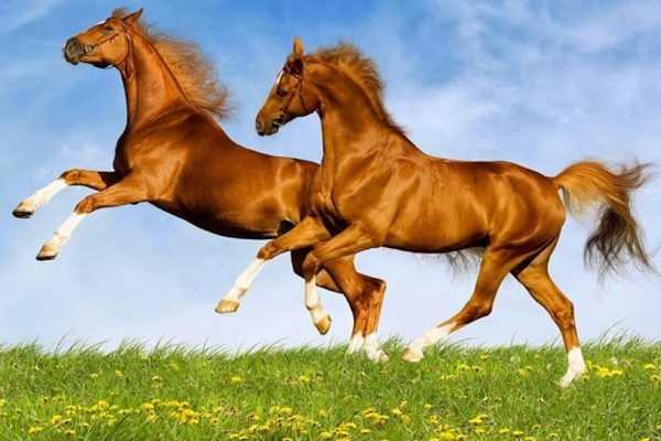 Mơ thấy ngựa đánh con số nào?