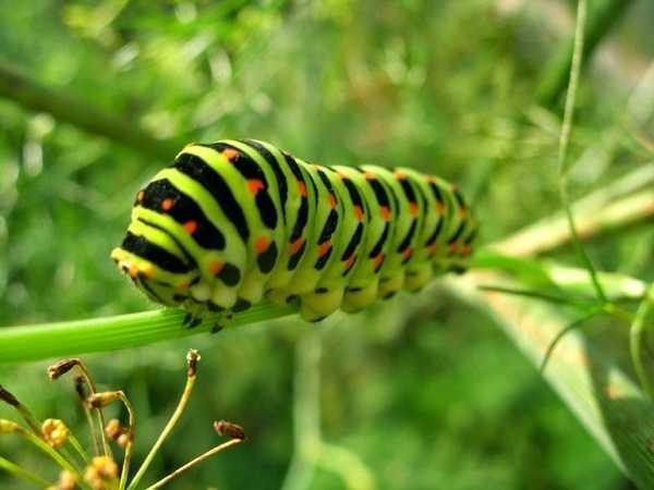 Mơ thấy sâu bọ sẽ đánh cặp số nào?