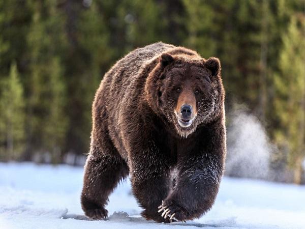 Mơ thấy gấu đánh con gì?