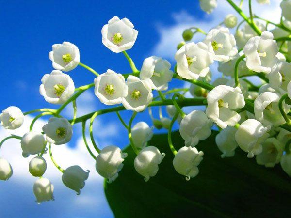 Mơ thấy mình hái hoa màu trắng đánh con gì?