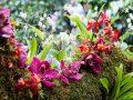 Nằm mơ thấy hoa lan đánh con gì có ý nghĩa gì đặc biệt